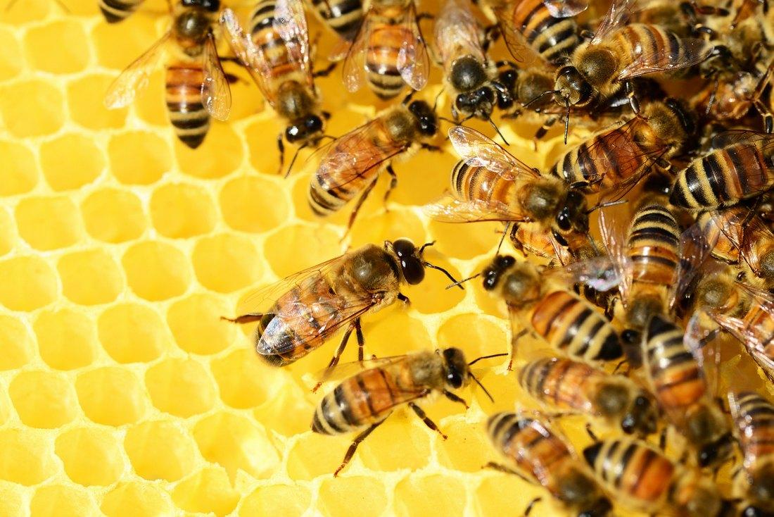דבורים בכוורת